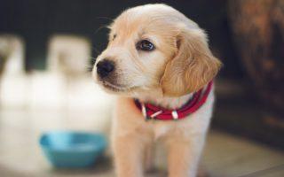 Производство корма для собак
